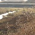 冬枯れの櫨谷川