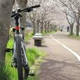 春のサイクリングロード