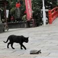 須磨寺のカメと猫