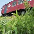 長良川鉄道と「あずきな」