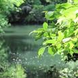 山田池の新緑