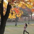 紅葉の公園(2)
