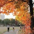 紅葉の公園(1)